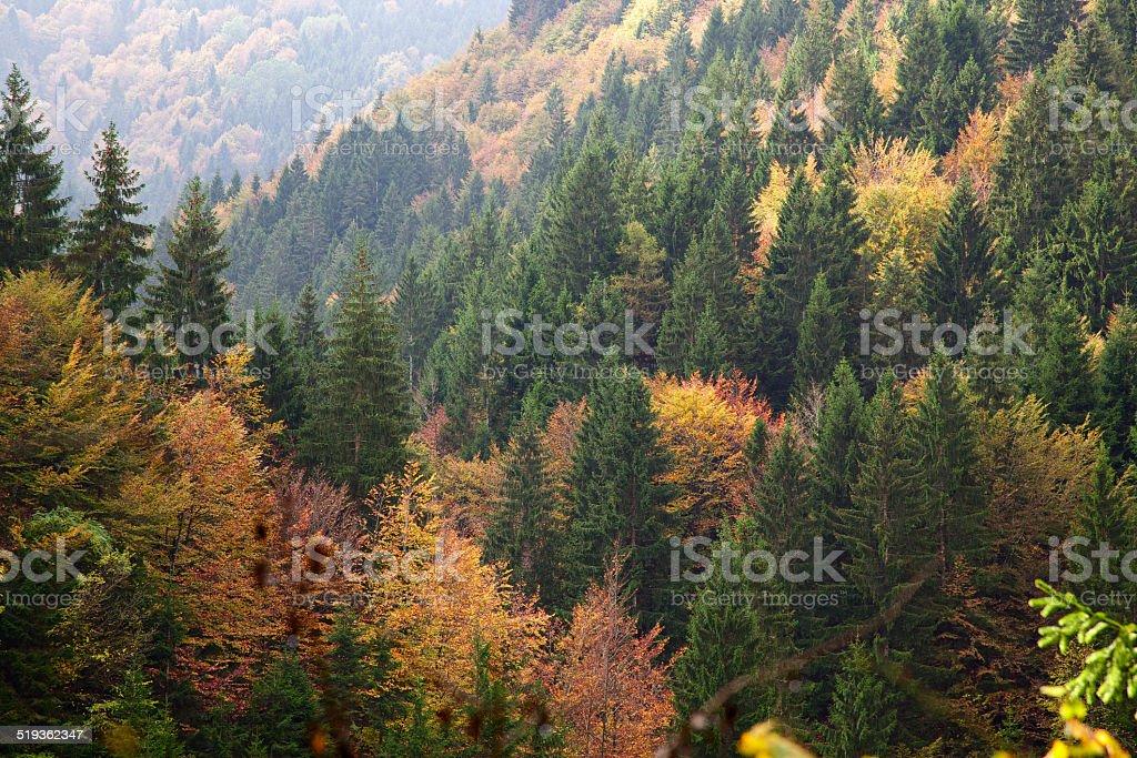 Fogliame di autunno Asiago alta plateau.  Veneto.  Italia. - foto stock