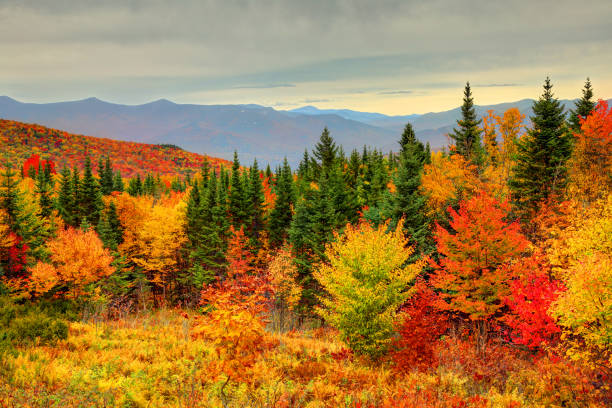 Autumn foliage in the White Mountains of New Hampshire Peak fall foliage in New Hampshire's White Mountains autumn leaf color stock pictures, royalty-free photos & images