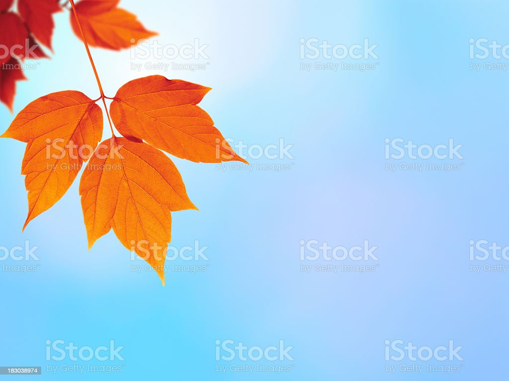 Autumn foliage on defocused background royalty-free stock photo