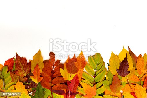 istock Autumn foliage on white background. Colorful leaves border. 1025456832