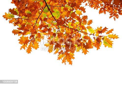 Autumn frame.