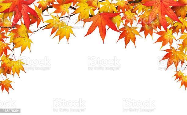 Photo of Autumn Foliage On White
