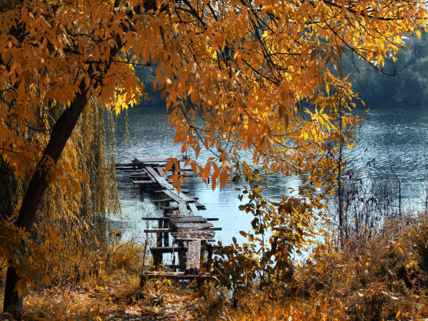 Autumn foliage over lake stock photo