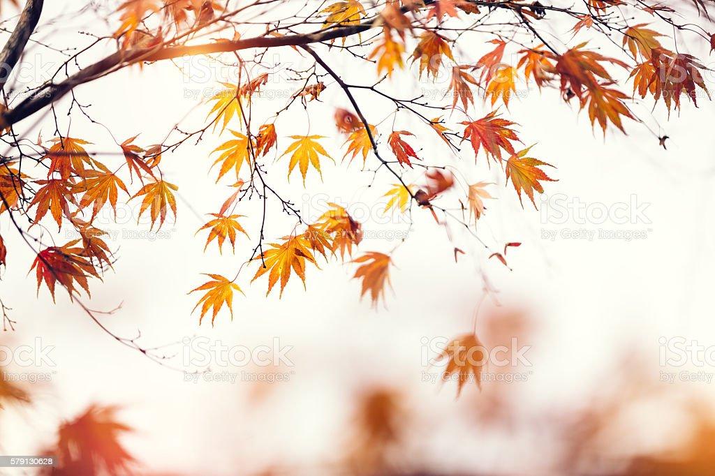 Feuillage d'automne - Photo