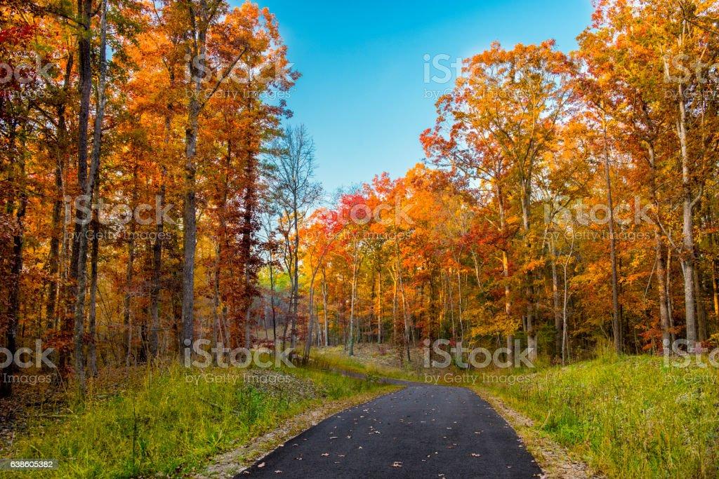 autumn Foliage stock photo