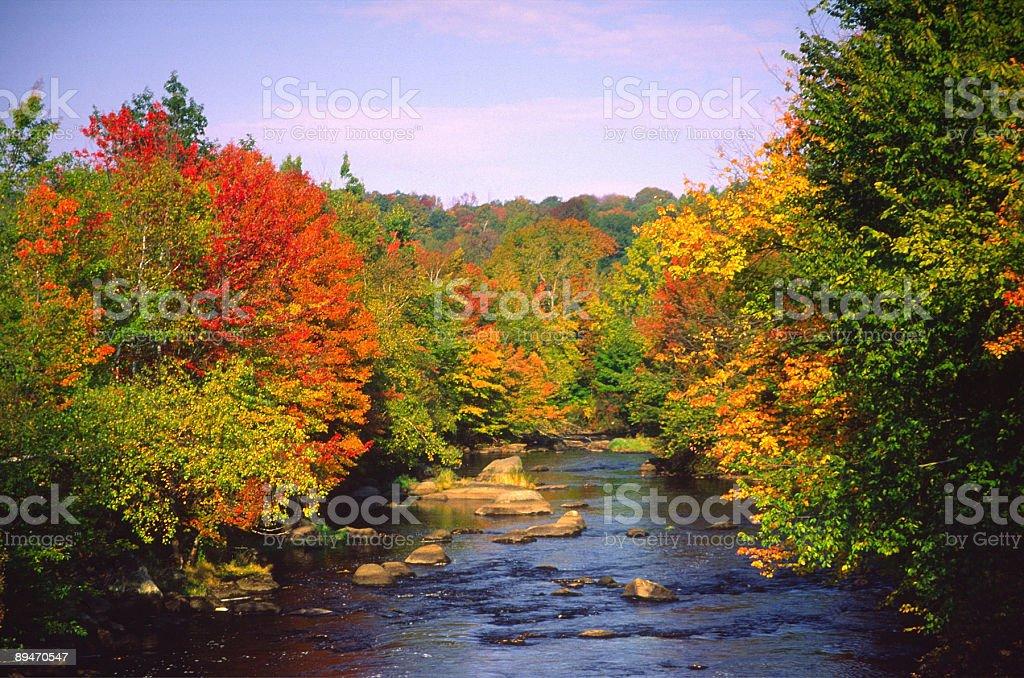 Follaje de otoño foto de stock libre de derechos
