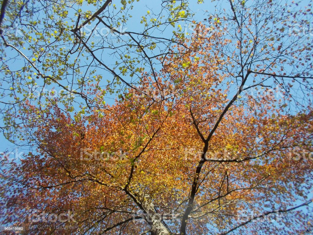 Feuillage d'automne - Photo de Arbre libre de droits