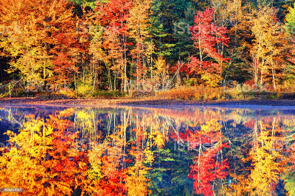 Autumn Foliage Reflection stock photo