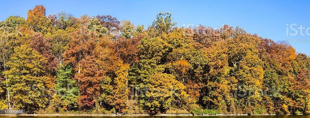 Autumn Foliage With a Clear Blue Sky stock photo