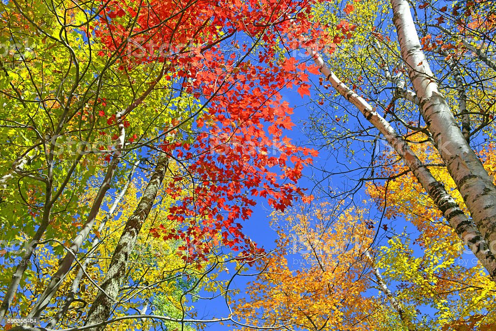 Autumn foliage, with red, orange and yellow colors, New York royalty-free stock photo