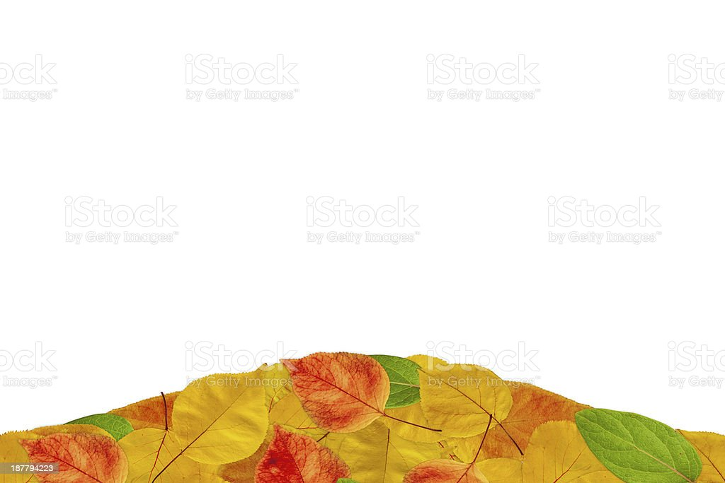 Autumn footer royalty-free stock photo