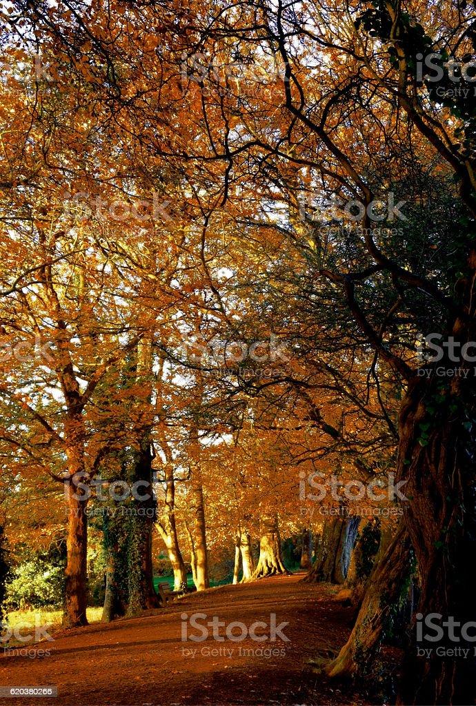 Outono Trilho foto de stock royalty-free