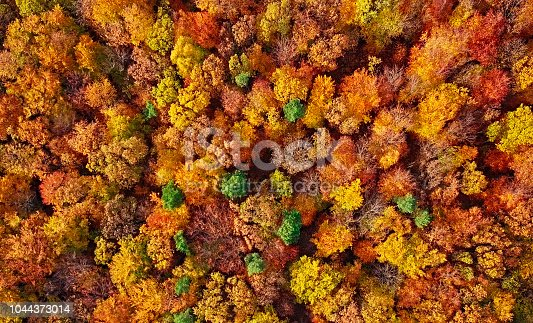 istock Autumn forest aerial background made directly from above 1044373014