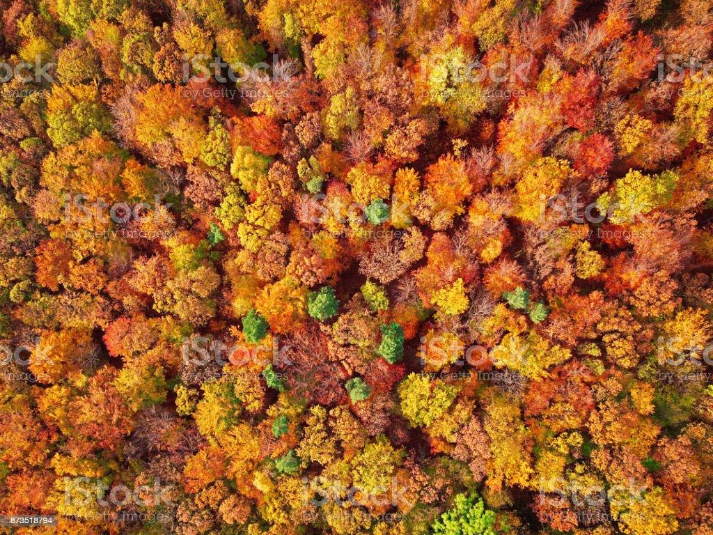 Herbst Wald Antenne Hintergrund direkt von oben gemacht. – Foto
