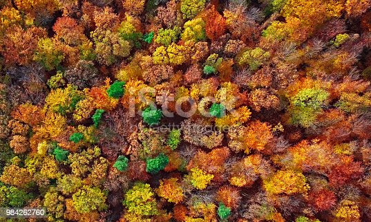 istock Autumn forest aerial background made directly from above 984262760