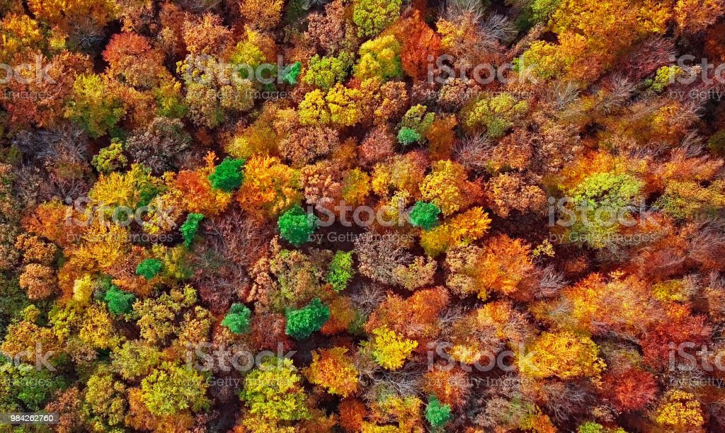 Herbst Wald Antenne Hintergrund direkt von oben gemacht – Foto