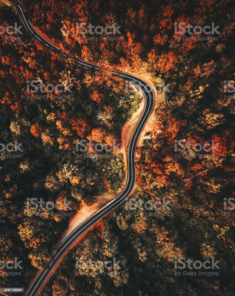 autumn forest aerial view in australia stock photo
