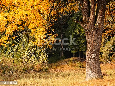 Mixed autumn forest after rain. Nature background
