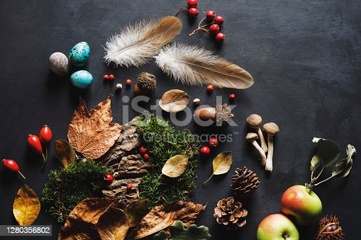 Autumn in the forest. Berries with colorful leaves and mushroom on black background.