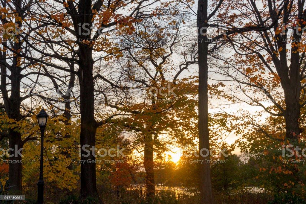 Autumn Forest as Sunset stock photo