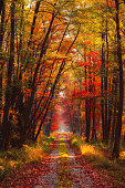 Autumn forest at morning with rays of warm sun light shine through branches and vivid gold and red fall leaves.
