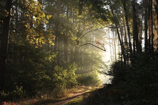 istock Autumn forest at sunrise 1050770282