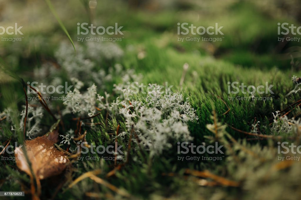 Autumn forest background stock photo