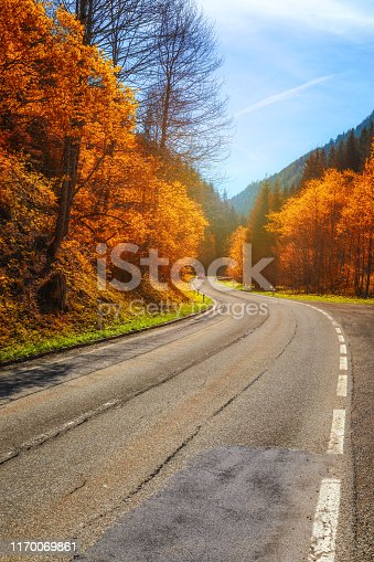 Autumn forest. Beautiful forest with country road at sunset. Colorful landscape with trees, rural road, orange and red leaves, sun. Travel. Autumn background. Amazing forest with vibrant foliage