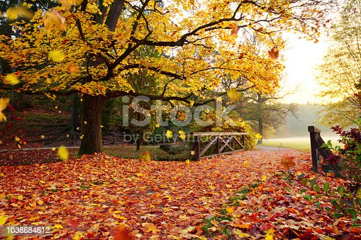istock Autumn forest. Beautiful rural scenery. 1038684612