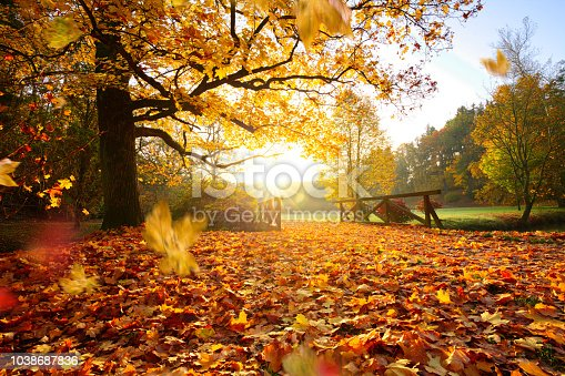 istock Autumn forest. Beautiful rural scenery. 1038687836