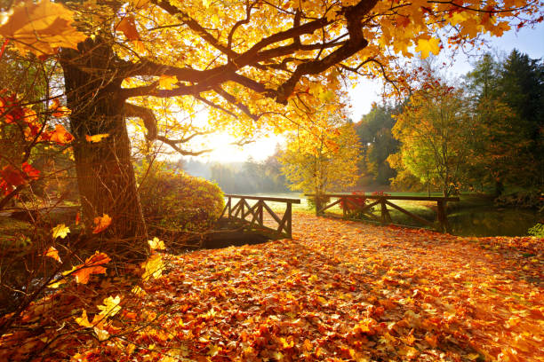 Autumn forest. Beautiful rural scenery. stock photo