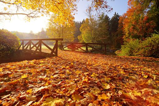 1038696838 istock photo Autumn forest. Beautiful rural scenery. 1047635210