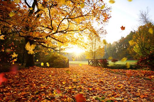 1038696838 istock photo Autumn forest. Beautiful rural scenery. 1047635346