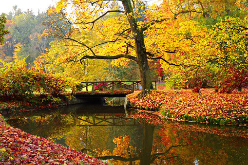 1038696838 istock photo Autumn forest. Beautiful rural scenery. 1047635490