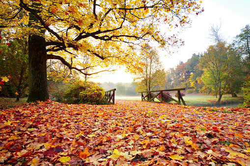 1038696838 istock photo Autumn forest. Beautiful rural scenery. 1047635854