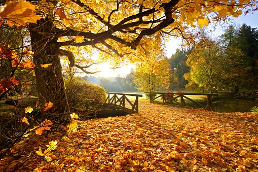 1038696838 istock photo Autumn forest. Beautiful rural scenery. 1047635894