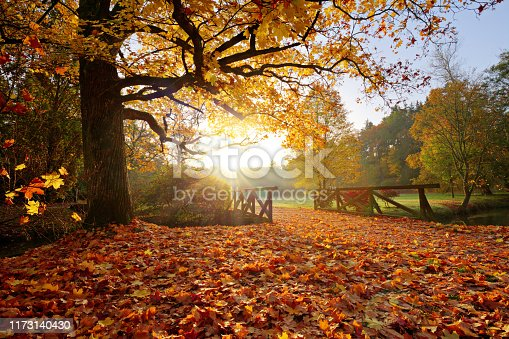 istock Autumn forest. Beautiful rural scenery. 1173140430