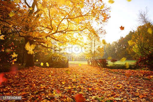 istock Autumn forest. Beautiful rural scenery. 1173140440
