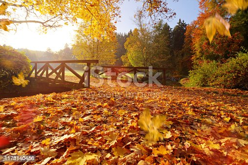 istock Autumn forest. Beautiful rural scenery. 1173140456