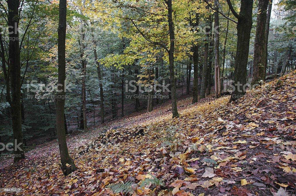 Autumn forest Bouillon belgian Ardennes Belgium royalty-free stock photo