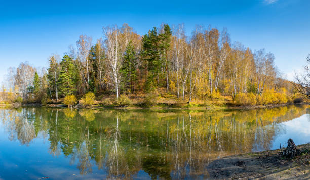 Autumn forest by the lake stock photo