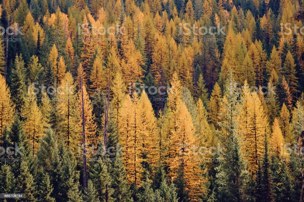 Autumn forest color stock photo