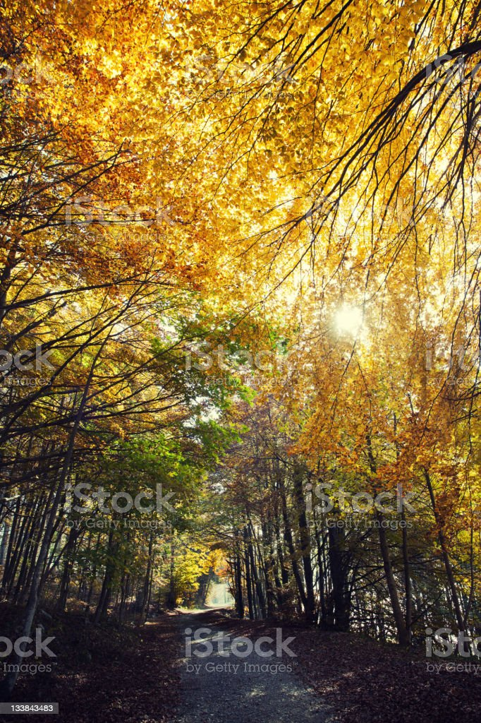 Autumn Forest, Dirt road in the Woods royalty-free stock photo