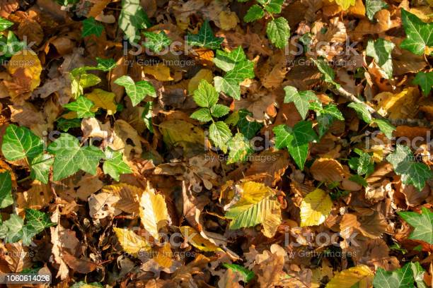 Photo of Autumn forest floor in the morning sunlight.