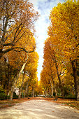 footpath in colorful autumn forest.