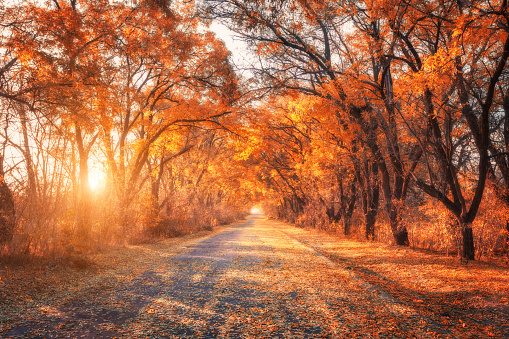 istock Autumn forest. Forest with country road at sunset 610453238