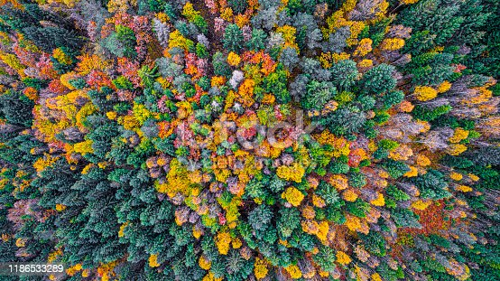 istock Autumn forest from above 1186533289