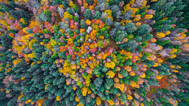 Autumn forest from above stock photo