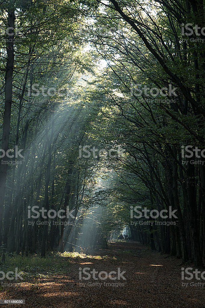 Autumn forest illuminated by sunbeams foto stock royalty-free