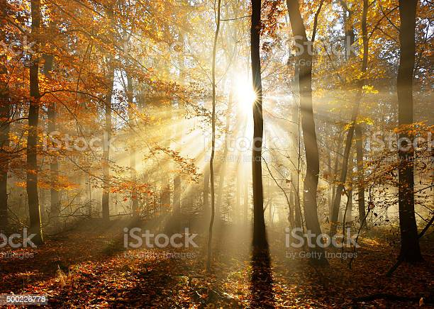 Photo of Autumn Forest  Illuminated by Sunbeams through Fog, Leafs Changing Colour